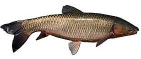 masfish рыбалка на диване